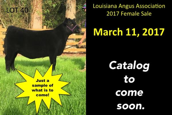 LA Angus Association Female Sale